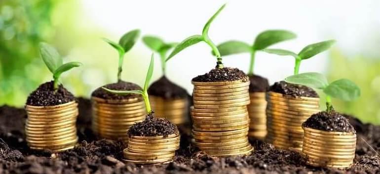 fincann legacy cash money coins seedlings